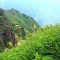 谷川岳に咲く