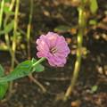 横に咲く花