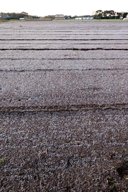 Photos: 今朝の霜