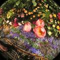 Photos: 花いっぱい