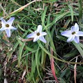Photos: 野に咲く花