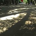 Photos: 参道の木漏れ日