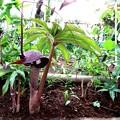 Photos: 庭の花ー1