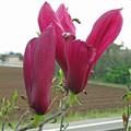 Photos: 庭の花-3