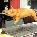 Photos: 子豚の丸焼き