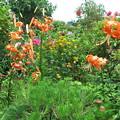 庭の花-10