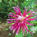 庭の花-11