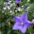 庭の花ー15
