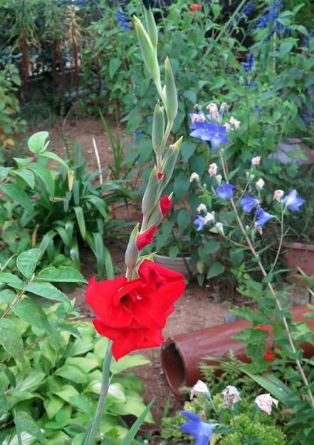 庭の花=17