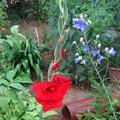 庭の花 -17