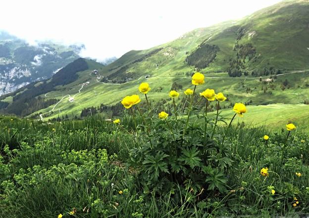 山野草咲く光景