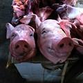Photos: 豚肉売り場