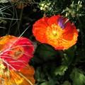Photos: 綺麗な花