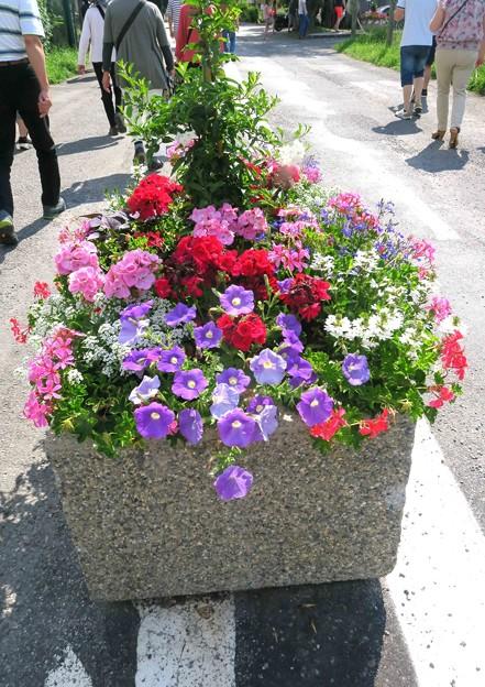Photos: 花の街-1