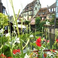 Photos: 花の街-2