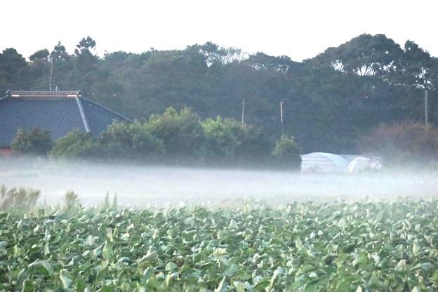 Photos: たなびく靄