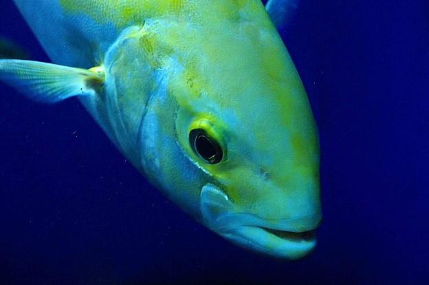Photos: 水族館で