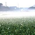 Photos: 朝の靄