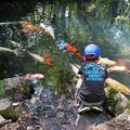 Photos: 鯉を見つめる子