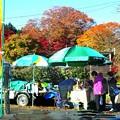 Photos: 大子のりんご