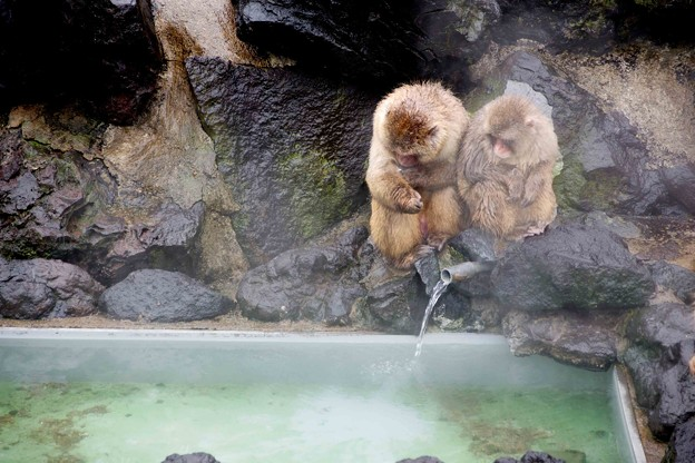 温泉で暖をとる