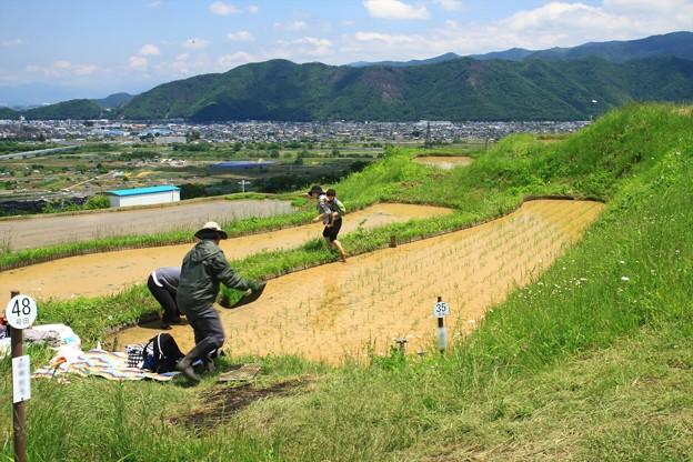 棚田の田植え (1)