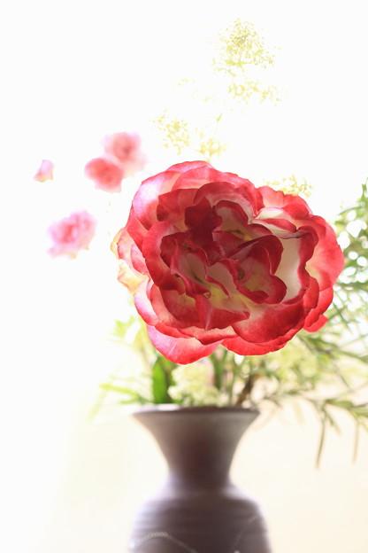 窓辺の薔薇