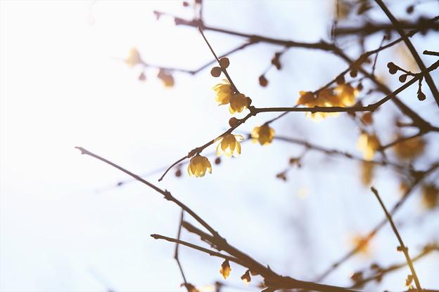 写真: 早春の芳賀天満宮_9