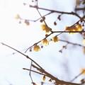 早春の芳賀天満宮_9