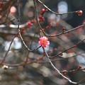 写真: 早春の芳賀天満宮_15