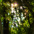 Photos: 藪の中へ、行ってみたいと思いませんか~?_2
