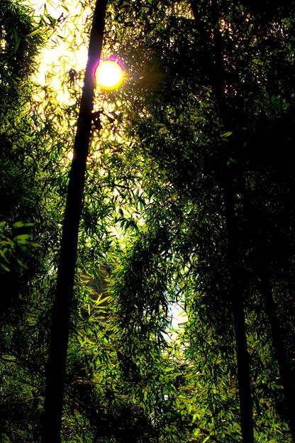 Photos: 藪の中へ、行ってみたいと思いませんか~?_3