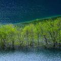 写真: 湖上の新緑