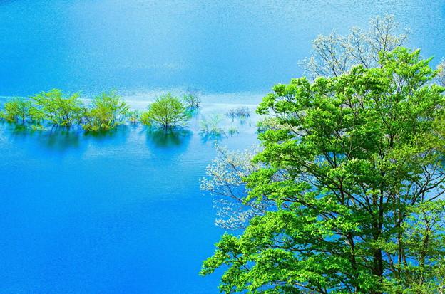 Photos: 湖上の春