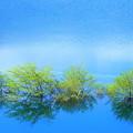 Photos: 碧の湖面