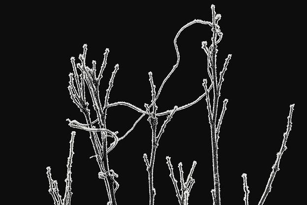 写真: 樹霜