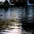 写真: 冬の渓流