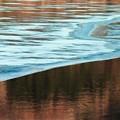 写真: 早春の湖畔