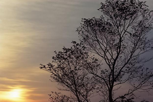 写真: 朧な朝