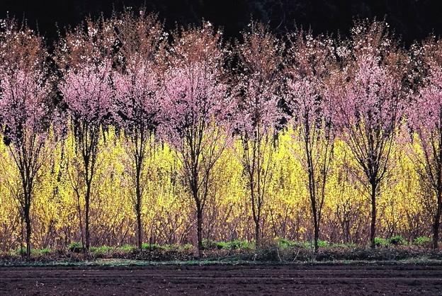 Photos: 春彩
