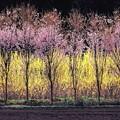 写真: 春彩