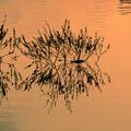 写真: 夕方の湖