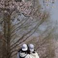 写真: 桜の下で