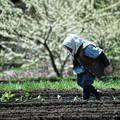 写真: 里山の春