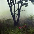 写真: 霧の朝