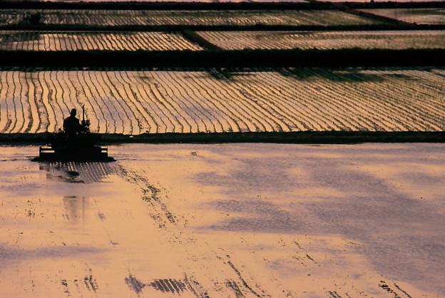 Photos: 田植えの頃