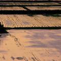 写真: 田植えの頃