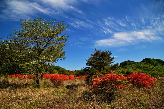 Photos: 晴れる高原