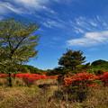 写真: 晴れる高原