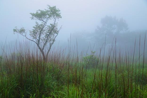 写真: 霞む木立